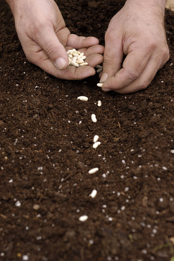 Direct Sowing – 3/28/12